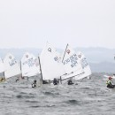 Optimist12a50